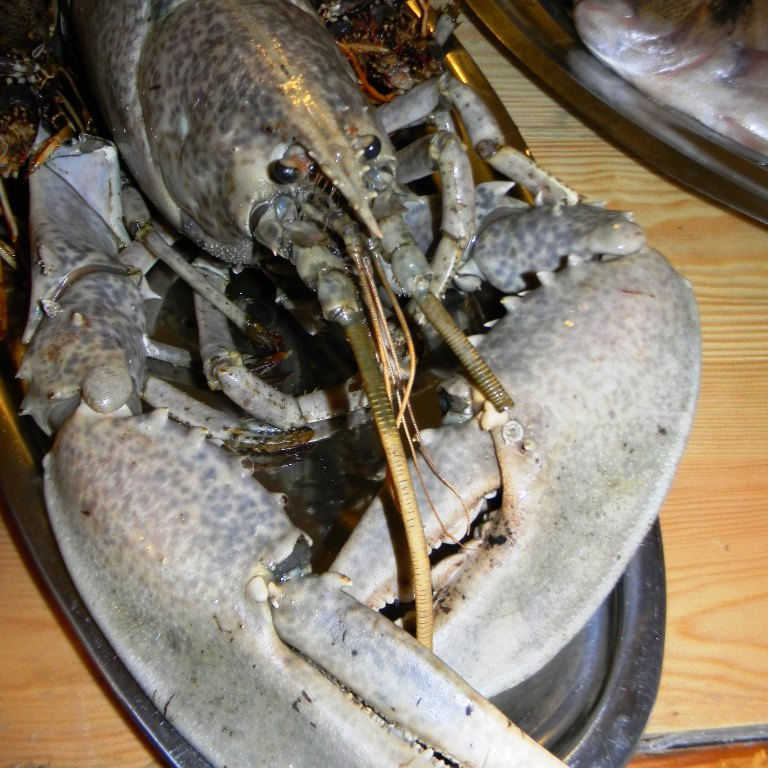 konoba skojera daily specialties grilled lobster restoran restorani restaurant trpanj