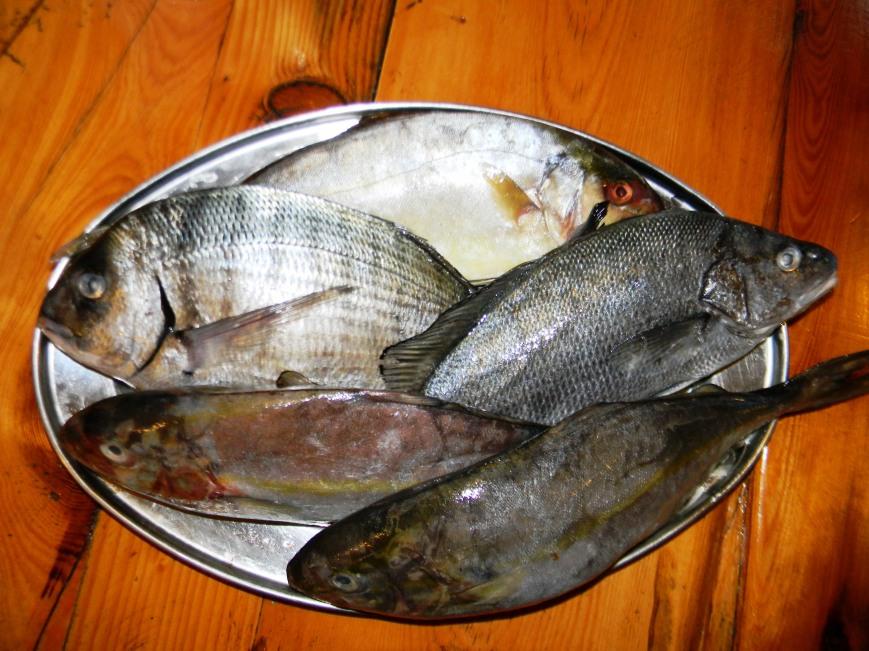 Fresh Fish and Sea Food Konoba Skojera Lobster