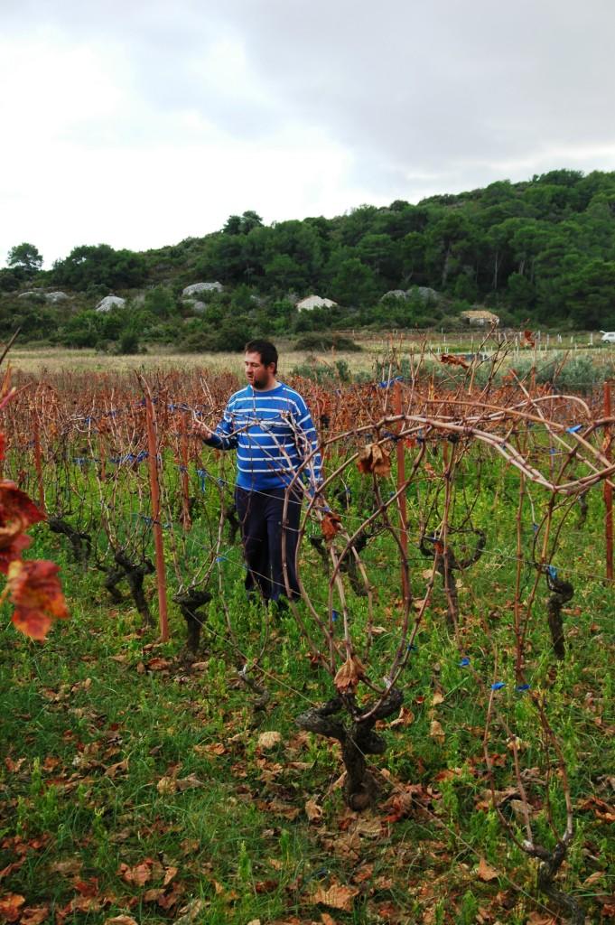 Konoba Skojera Trpanj Croatia wineyard