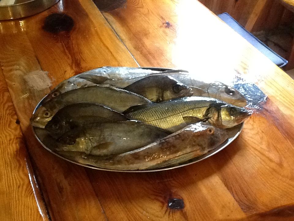 Konoba Skojera Trpanj grilled fish